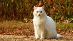 Día Internacional del Gato el 20 de febrero