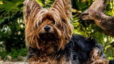 Razas de perros con más belleza