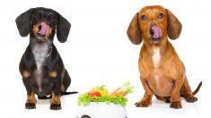 Recetas de ensaladas para perro