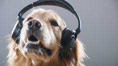 Canciones de perros