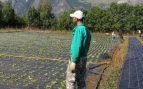subsidio agrario