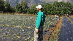 ¿Qué es el PER El subsidio agrario que propone el Gobierno