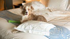 ¿Cómo dejar a tu perro en una residencia canina?
