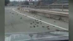 Petroquímica de Tarragona_ aparecen decenas de pájaros muertos en los alrededores