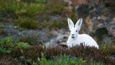 ¿Cuántos tipos de conejos hay?