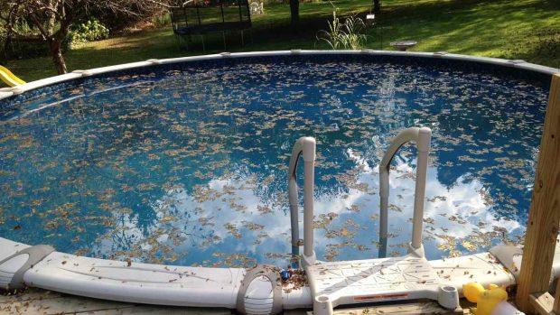 ¿Cómo evitar insectos en tu piscina doméstica?