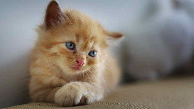 Gestos indicativos del gato
