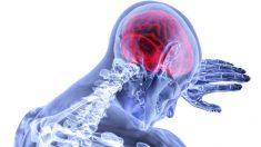 Curiosidades sobre los ventrículos cerebrales