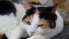 Día Internacional del Gato_ curiosidades sobre este felino