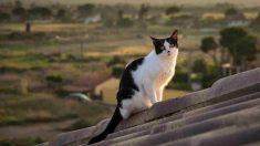 Trucos para echar del tejado a un gato