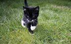 Juegos y ejercicios para el gato