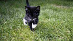 Ejercicios físicos positivos para tu gato