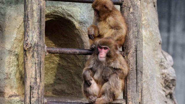 No dar alimentos a los animales en el zoo