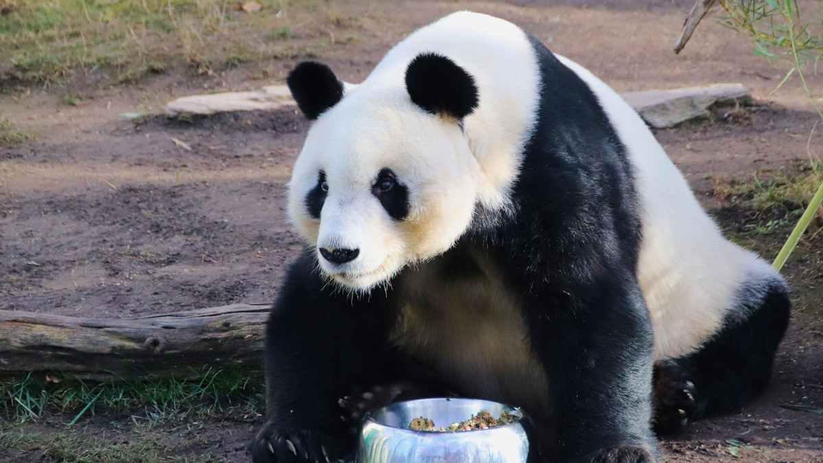 Riesgos de ofrecer comida a los animales en el zoo