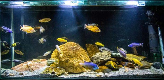 Cuidados acuario