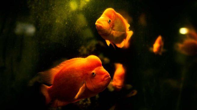 Problemas acuario