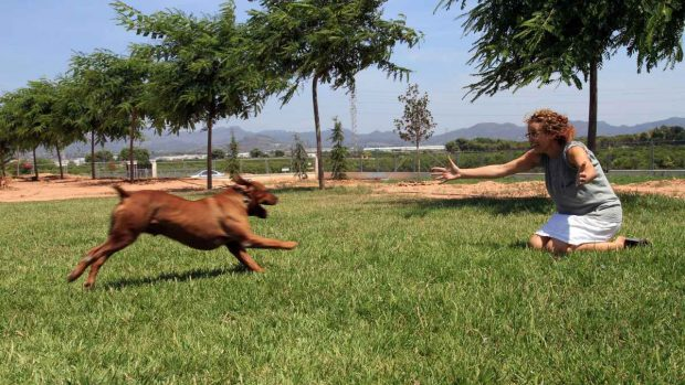 Perro en residencia canina