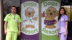 Requisitos de una residencia canina