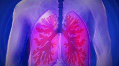 Funcionamiento de los pulmones