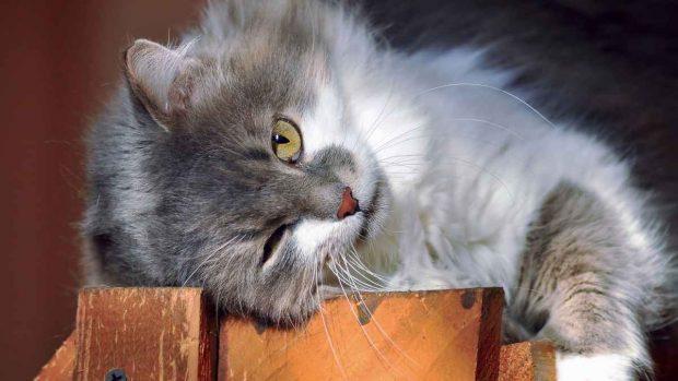Potenciar mente gato