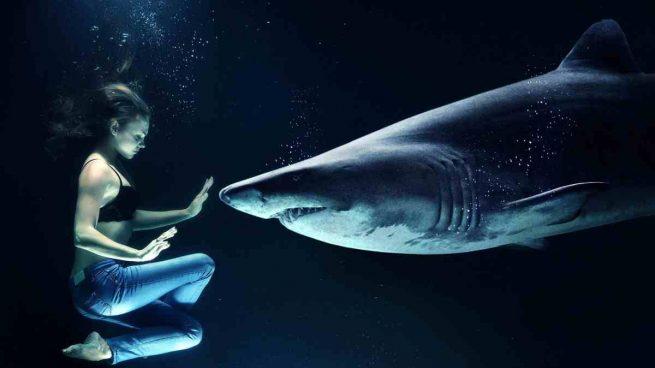 Tiburón difícil domesticar