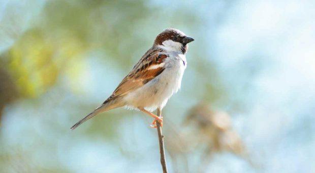El sexo en los pájaros