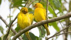 La determinación del sexo de un pájaro
