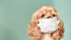 ¿Afecta el coronavirus a los animales?