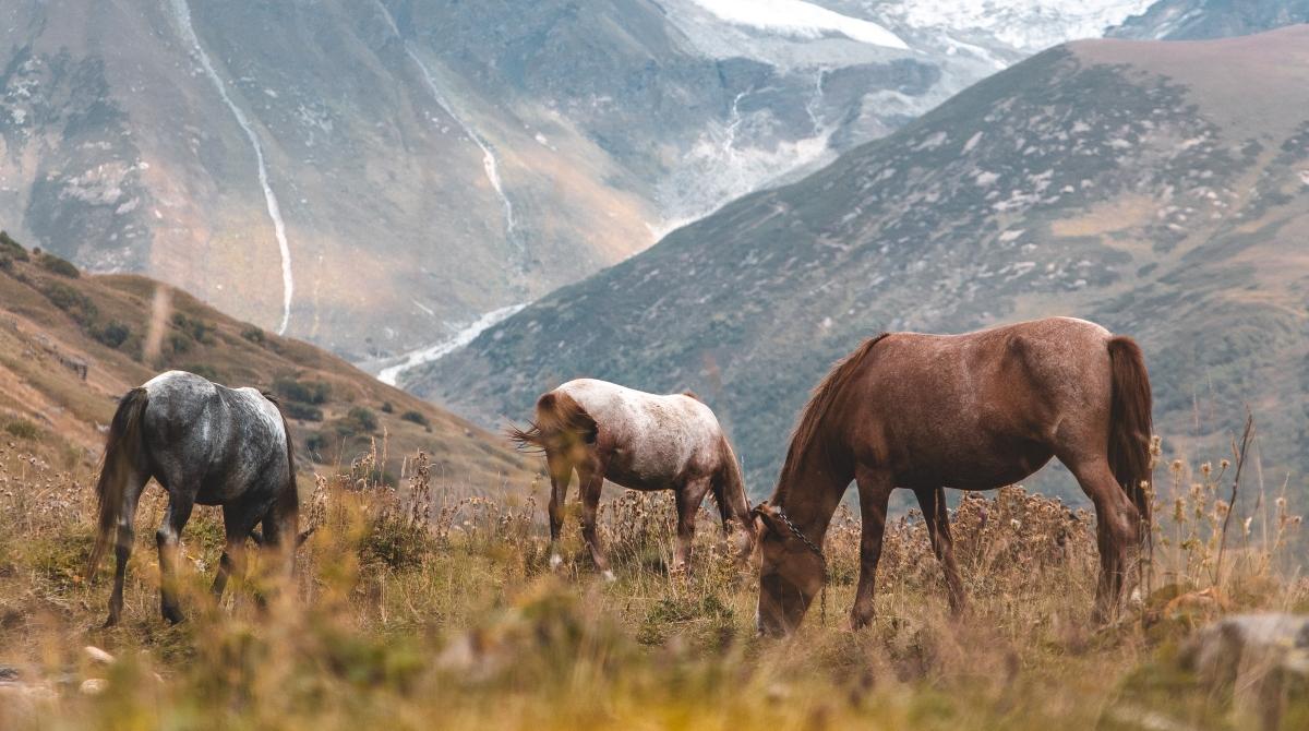 Ruidos y caballos
