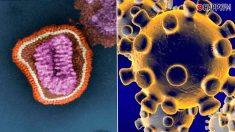 El coronavirus y la gripe desatan una guerra en Twitter: «He venido a matar, no a discutir»