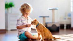 Descubre los beneficios para los niños de tener un gato en casa