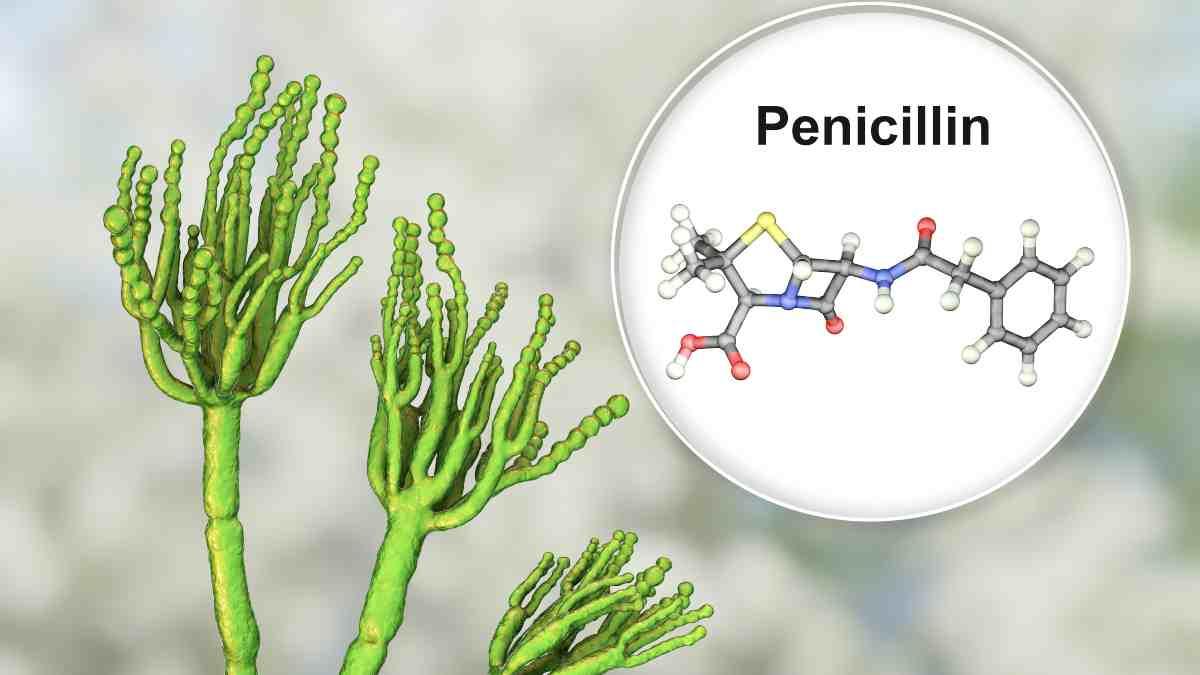 Curiosidades: resistencia a la penicilina