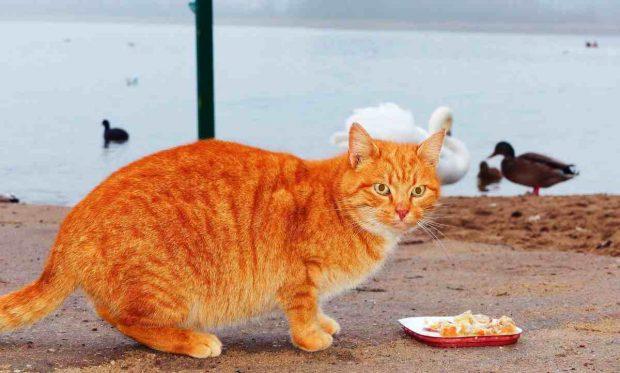 Alimentación gato anciano