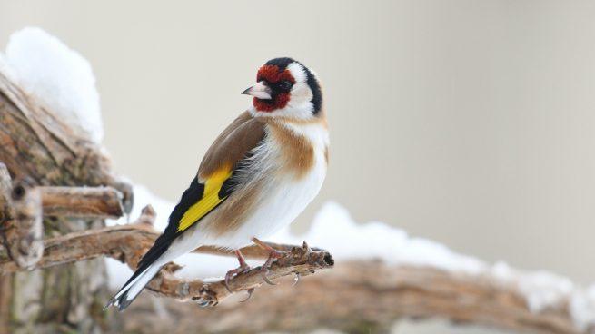 ¿Cómo llamar a tu pájaro?