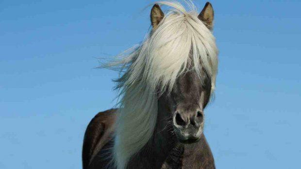 Vitalidad en el caballo