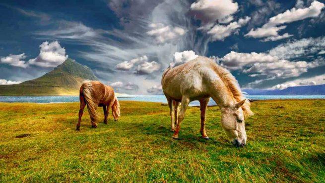 Cambios de temperatura en caballo
