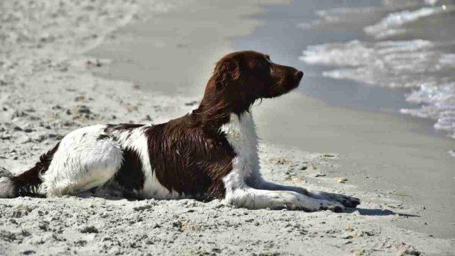 Llevar tu perro a la playa