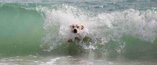 Perro disfruta en la playa