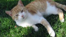 Síntomas de que tu gato no respira correctamente