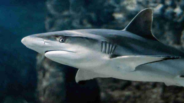 Los tiburones no son peligrosos