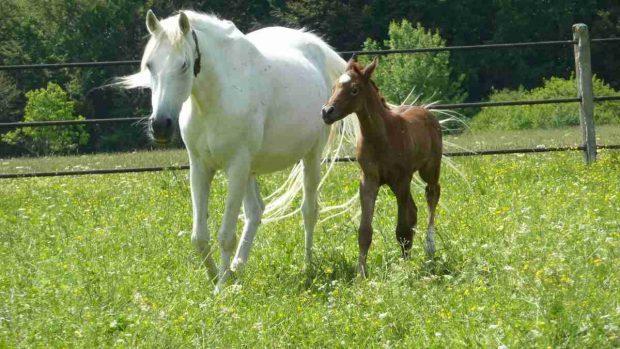 El caballo en verano