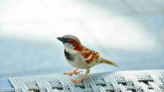 Alimentos prohibidos para tu pájaro doméstico