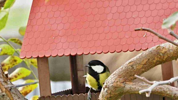 Alimentos que no debe tomar tu pájaro doméstico
