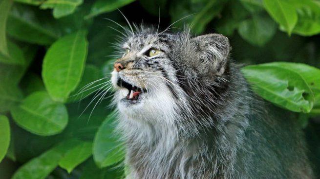 Respiración gato