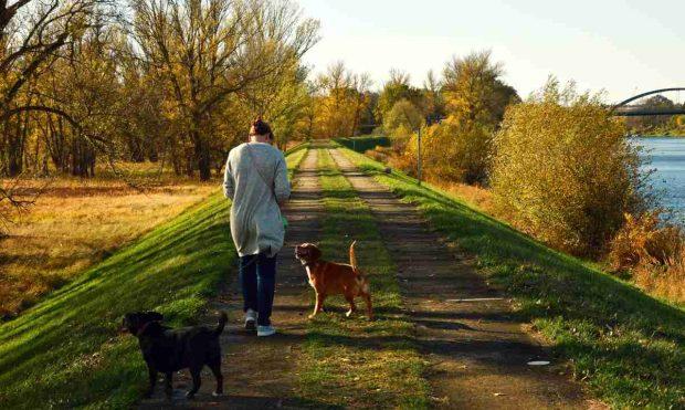 Consejos para pasear con tu perro