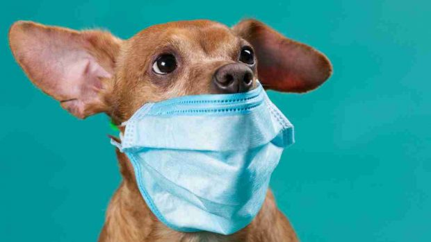 Animales y coronavirus
