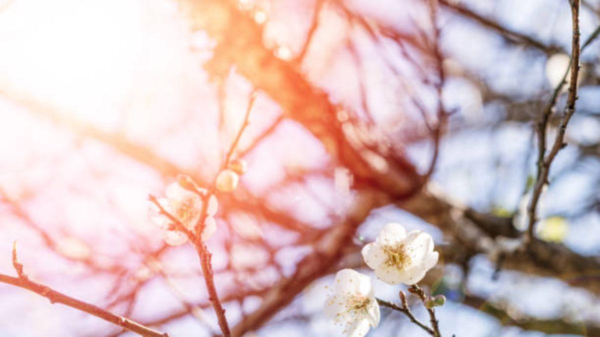 Conoce qué es y por qué se produce el equinoccio de primavera