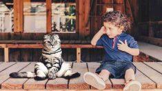 Convivencia de los gatos y los niños