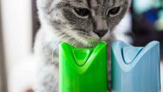 Consejos para dar perfume a tu gato