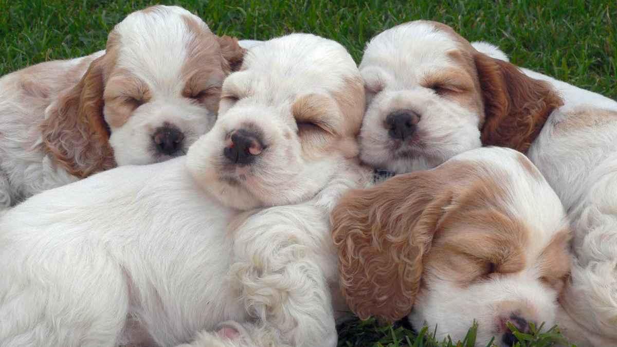 Cada cachorro tiene un carácter propio